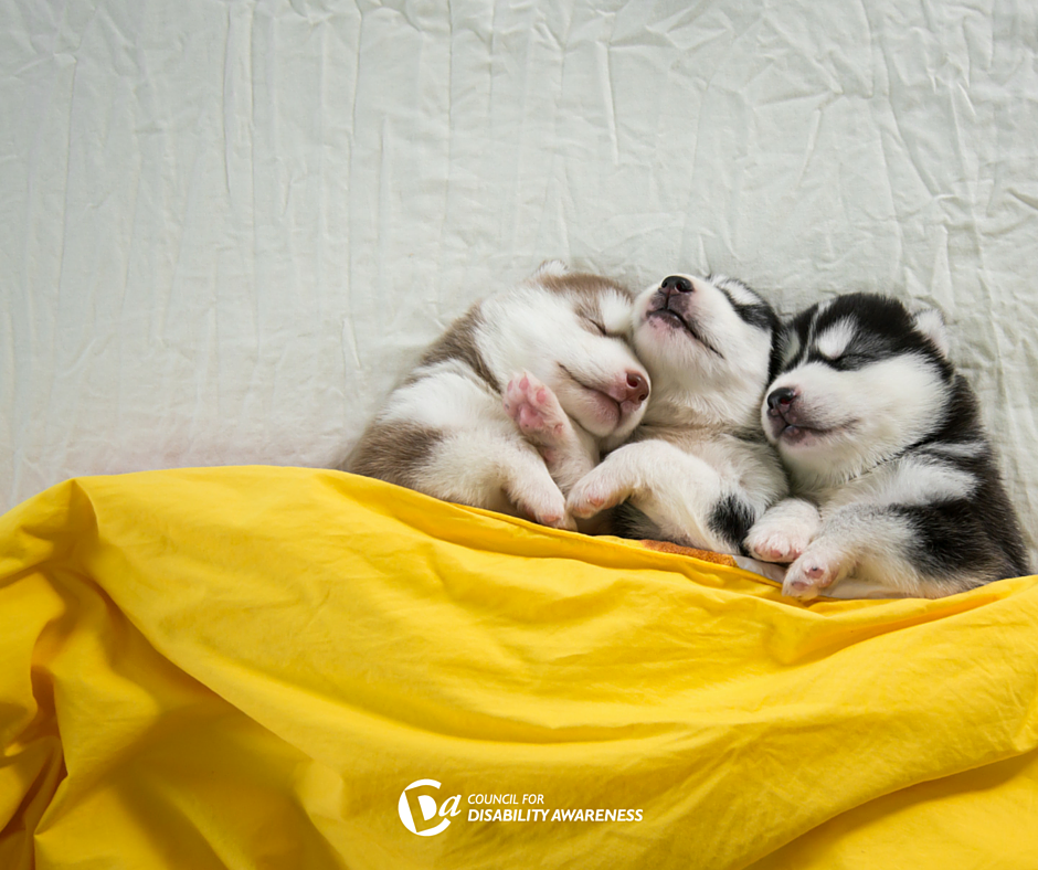 It's National Puppy Day! Let's Celebrate the Health Benefits of Pets